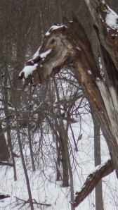 horsehead tree 01:05