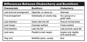 chokecherries