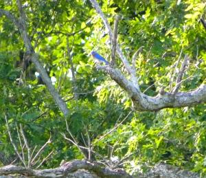 bluebird 06:04