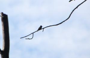 hummingbird 06:04
