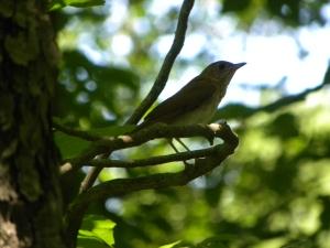 mystery bird 06:26