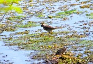 sparrow 06:04